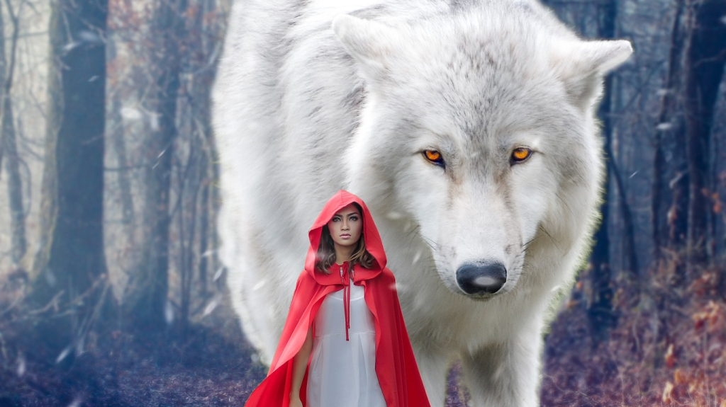 A large white wolf walking through a forest with little red riding hood.